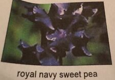 "Pack of 5 ""Royal Navy Blue"" Sweet Pea Seeds NEW!"