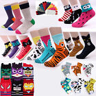 CHOICE FULL SET !!! OF NEW BEST SELLING SOCKS intype woman women's korea socks