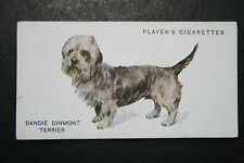 Dandie Dinmont Terrier   Early 1930's Original Vintaged Card # VGC