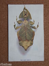 R&L Postcard: The Leaf Insect/Bug, Carlton Publishing