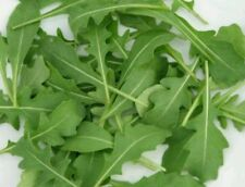 ROCKET - SALAD - CULTIVATED - 8000 SEEDS  10g
