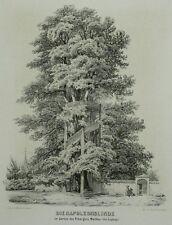 Tonlithografie 1854 - MARKKLEEBERG Rittergut Wachau - Napoleonslinde