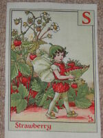 Flower Fairy / Fairies Cotton Alphabet / Letter Fabric Panel ~ S, Strawberry