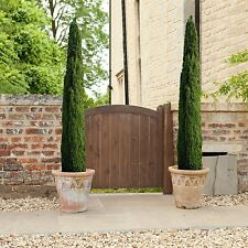 1.4m Evergreen Italian Flower Cypress Trees Garden Patio Outdoor Plant Set of 2