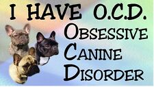 FRENCH BULLDOG - OBSESSIVE CANINE DISORDER Dog Car Sticker By Starprint