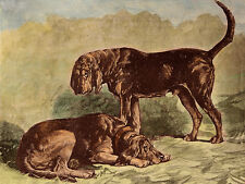 BLOODHOUND CHARMING DOG GREETINGS NOTE CARD TWO BEAUTIFUL DOGS IN RURAL SETTING