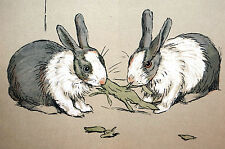 Cecil Aldin Print 1912 Twin Bunny Rabbits NIBBLING on LETTUCE - Matted Litho Art