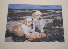 "LABRADOR RET ""SEA URCHINS"" 3/50 Ltd ED. DOG PHOTO SIGNED TARA DARLING CHRISTMAS"