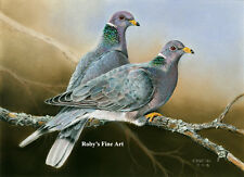 """""""Band Tailed Pigeon"""" Art Print 5x7 Giclee Image by Realism Artist Roby Baer PSA"""
