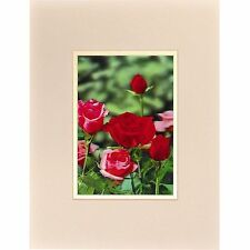 Pink Red Roses 3D Lenticular Wall Decor w Ready Frame 8x10  #SSP-458-RF-COMO#