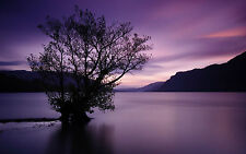 Framed Print - Tree Growing in a Purple Lake with Purple Sky (Picture Poster Art