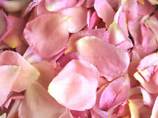 10L BABY PINK/IVORY MIX.FREEZE DRIED ROSE PETALS REAL WEDDING CONFETTI