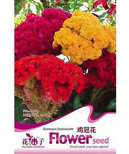 FD1627 Cockscomb Seed Celosia Cristat Ornamental Flower ~1 Pack 100 Seeds~