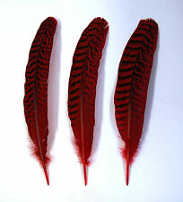 "3 Pcs PEACOCK QUILLS 10""-14"" Dyed RED Feathers; Costume/Bridal/Halloween"