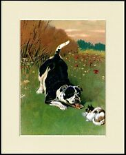 STAFFORDSHIRE BULL TERRIER AND CAT LOVELY DOG PRINT MOUNTED READY TO FRAME
