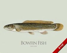 BOWFIN FISH PAINTING AMERICAN FRESHWATER FISHING ART REAL CANVAS PRINT