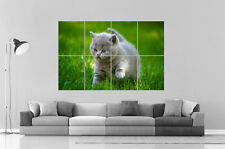 baby Cat Chaton Chat  Wall Art Poster Grand format A0 Large Print