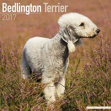 Bedlington Terrier 2017 Calendar 15% OFF MULTI ORDERS!