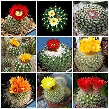 100 semillas mezcla Parodia, cactus mix, plantas suculentas,seeds mix S