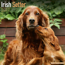 Irish Setter 2017 Calendar 15% OFF MULTI ORDERS!