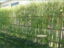 10 fresh White Willow 4-5ft, Salix Alba Hedging Plants, Quick Growing Screen