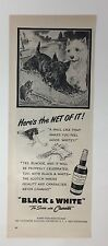 Original Print Ad 1951 BLACK & WHITE Scotch Westies Here's the Net of IT!