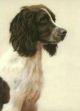 Nigel Hemming JUST DOGS - LIVER & WHITE ENGLISH SPRINGER SPANIEL Gun Dogs Art