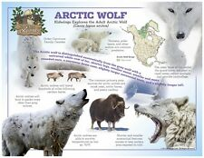 Stunning Laminated 24x18 Wolves of the World Poster: Arctic Wolf