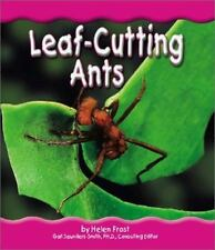Leaf-Cutting Ants (Rain Forest Animals)
