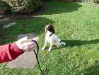 Extra Long 6mm Strong Dog Training Rope Slip Lead Gundog Stop-Pulling Leash
