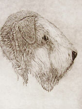 GEOFFREY LASKO - SOFT COATED WHEATON TERRIER  ORIGINAL ETCHING - S&N - FREE SHIP