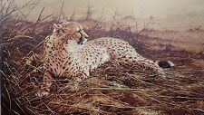 Alan Hunt, Cheetah Poster, LAZY AFTERNOON Image