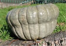 Pumpkin, Queensland Blue, Old Australian Heirloom, 10 Seeds