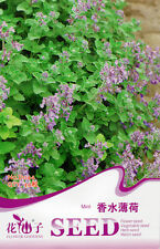 40 Original Pack Seeds Fragrance Mint Seeds Mentha Arvensis D044