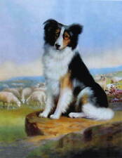 Collie, Sheep Dog on Rock watching sheep by R Atkinson Fox