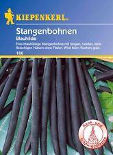 Kiepenkerl - Stangenbohnen 166 * Blauhilde * blauhülsige Bohne blau