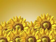 YELLOW SUNFLOWERS FLOWERS BLOOMS PHOTO ART PRINT POSTER PICTURE BMP1995A