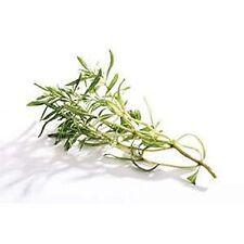 Huile essentielle Thym Satureoide 10 ml, huile très polyvalente, qualité certif