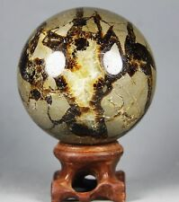 284g Polished DRAGON SEPTARIAN sphere Crystal w/Rosewood Stand Madagascar