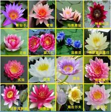 30 Pcs/bag Mix Color Hydroponic Flowers SMALL WATER LILY Seeds Mini Lotus Seeds