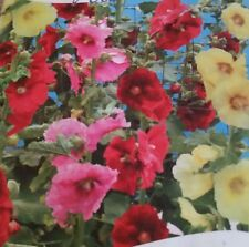 Hollyhock Perennial Mixture Flower Seeds