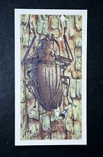 GIANT BEETLE   Original 1960's Colour Insect Card   VGC