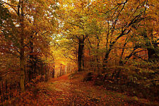 Framed Print - Sunny Walk through a Autumn Forest (Picture Poster Walking Art)