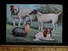 Victorian Trade Card Various Dog Breeds Stunning Images Outside Setting F40