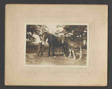 Ca 1900 Real Photo Of Horses Mounted