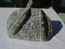 AMMONITE /ORTHOCERAS FOSSIL BOOKENDS FOR DISPLAY i118