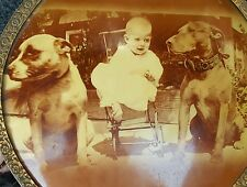 ANTIQUE VINTAGE AMERICAN PIT BULLS DOG BABY CHICAGO MEDALLION BUTTON RARE PHOTO