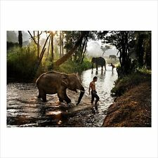 STEVE McCURRY Elephants in Thailand SIGNED original PHOTOGRAPH