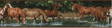 WILD HORSES BORDER peel & stick wallpaper Farm Ranch Country Western room decor