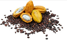 5 Cocoa Seeds,Cacao Seeds, Chocolate Nut Tree Theobroma cacao L.Free Ship